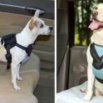 Ремень безопасности для собаки