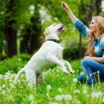 Как мотивировать собаку