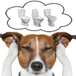 Как приучить собаку к унитазу