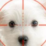 Как уберечь собаку от догхантера