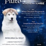 Pluto Northern Sunrise. Available for sale.