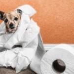 У собаки диарея
