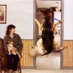 Собака боится ветеринара