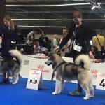Чемпионат  ЕвроДогШоу-2018