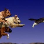 Погоня за кошкой