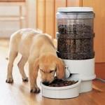 Автоматическая кормушка для собак