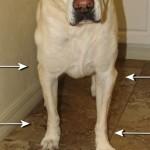 Воспаление суставов у собак