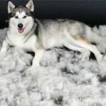 Линька у собаки